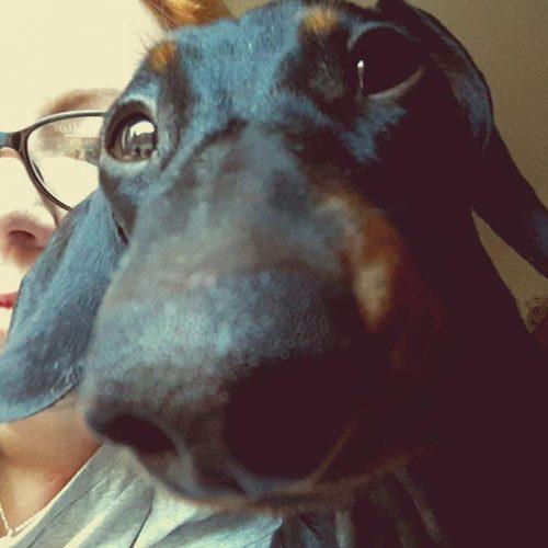 Bakos Zsófi - kutyanyilvántartás